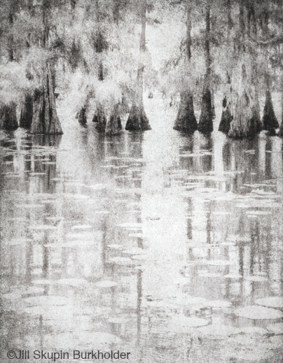 Fine photographic print of Caddo Lake by Jill Skupin Burkholder, at Sun to Moon Gallery, Dallas, TX – Partial sale proceeds benefit Caddo Lake Institute