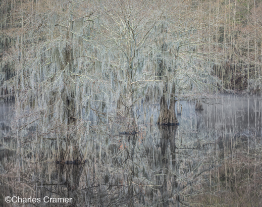 Fine photographic print of Caddo Lake by Charles Cramer, at Sun to Moon Gallery, Dallas, TX – Partial sale proceeds benefit Caddo Lake Institute