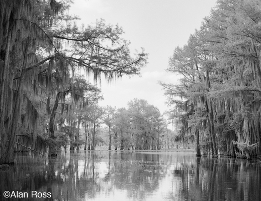 Fine photographic print of Caddo Lake by Alan Ross, at Sun to Moon Gallery, Dallas, TX – Partial sale proceeds benefit Caddo Lake Institute