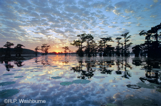 Fine photographic print of Caddo Lake by R.P. Washburne, at Sun to Moon Gallery, Dallas, TX – Partial sale proceeds benefit Caddo Lake Institute