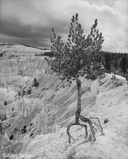 """Tenacity Defined, Bryce Canyon"" fine print by Alan Ross, at Sun to Moon Gallery"