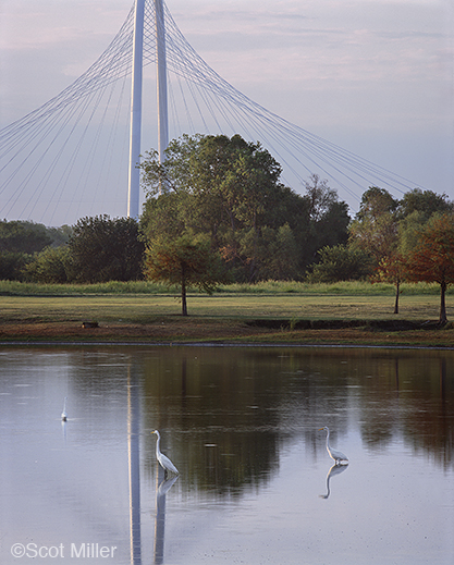 Fine photographic print of the Great Trinity Forest by Scot Miller, at Sun to Moon Gallery