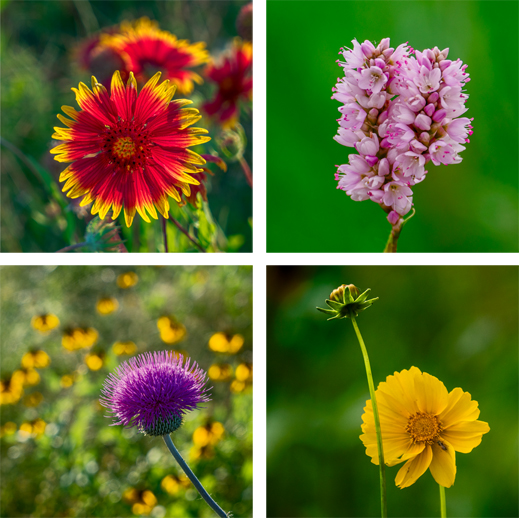 Fine Photographic Prints of Trinity Skyline Trail Flowers, at Sun to Moon Gallery