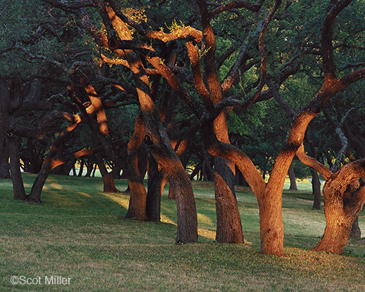 Fine Photographic Print form the LBJ Ranch by Scot Miller, available at Sun to Moon Gallery. Dallas, TX
